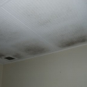 Solar ventilation for homes offers mould prevention and ensures a dry home